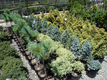 The Stars Of Show Our Plants Eldoorn Landscape Nursery